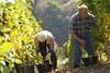Vineyard_workers